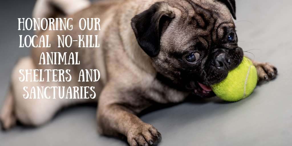 Our local no-kill animal shelters provide a often overlooked service to our neighborhoods and communities where we live, learn, work, and play. That is why we want to give a few of our local no-kill dshelters a shout out for their outstanding work.