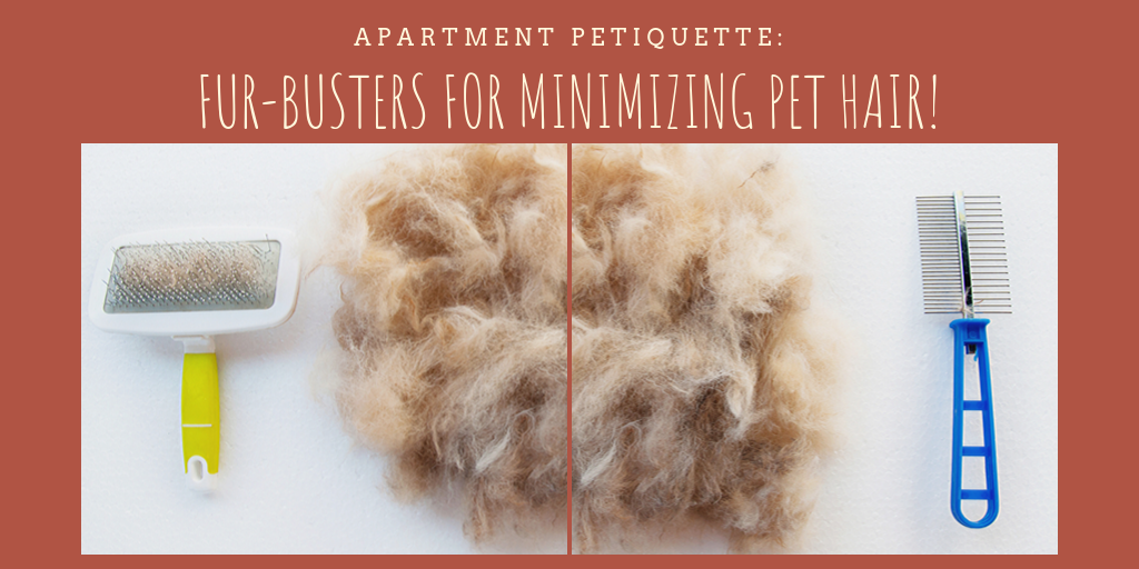 You love your dog but are tired of hair everywhere. Try the following inexpensive steps for a hair-free dwelling and well-groomed dog.